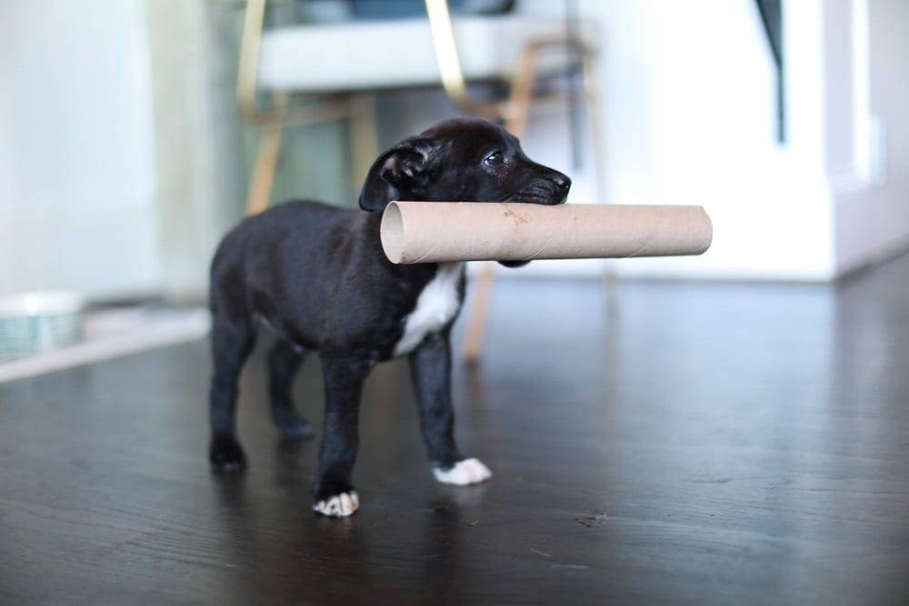 Co robić z psem zimą? 3 pomysły na zabawę i trening w domu